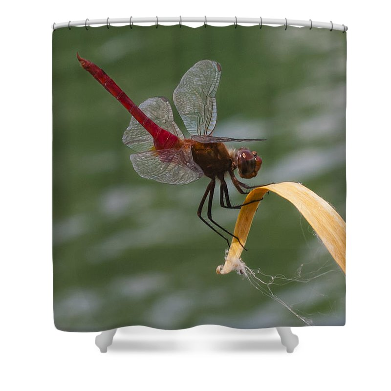Red Shower Curtain featuring the photograph Red Dragonfly by Dennis Reagan