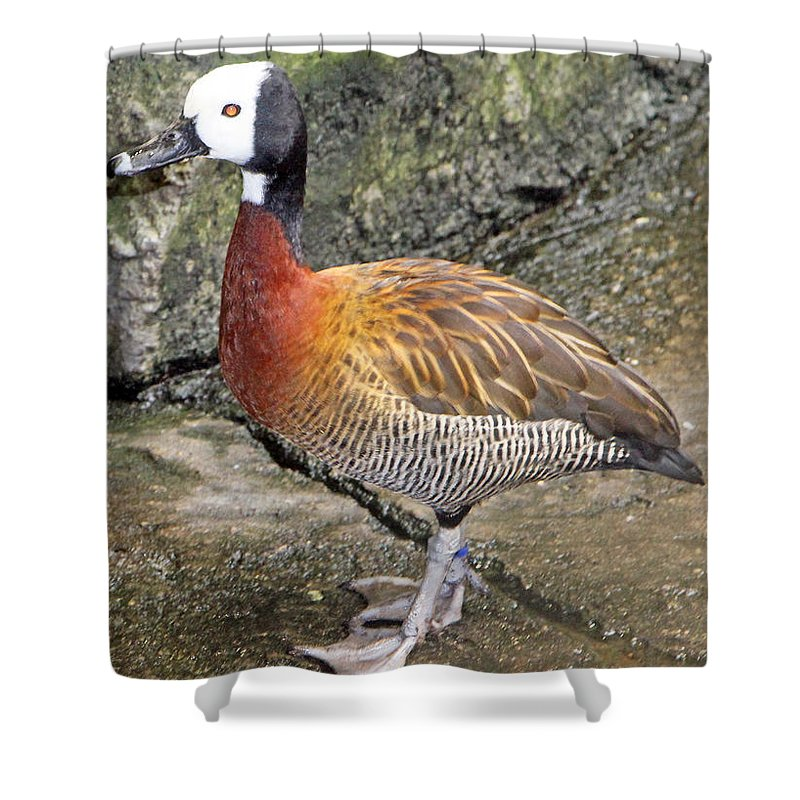 Red Eye Shower Curtain featuring the photograph Red Eye by Munir Alawi