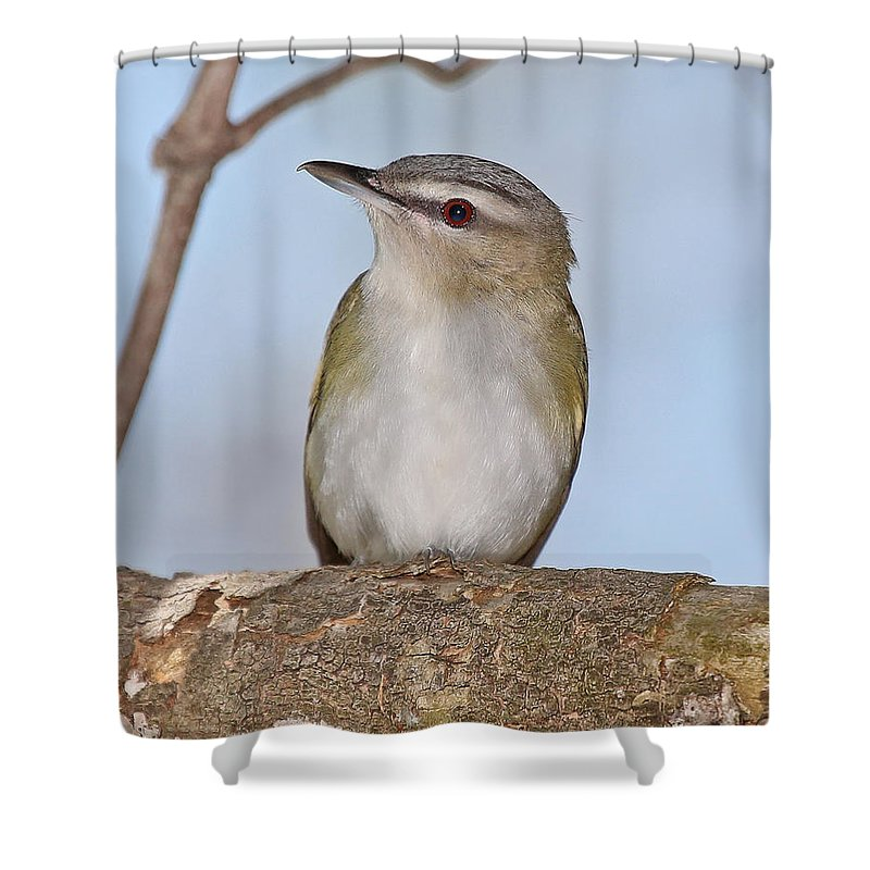 Nature Shower Curtain featuring the photograph Red-eyed Vireo by Mike Dickie