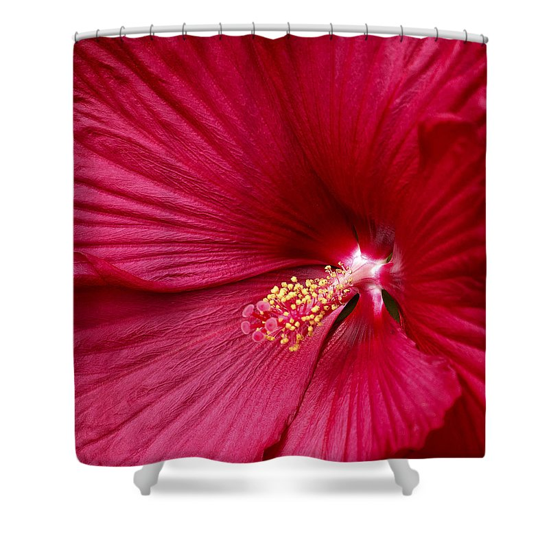 Red Flower 2 Shower Curtain featuring the photograph Red Flower 2 by Wes and Dotty Weber