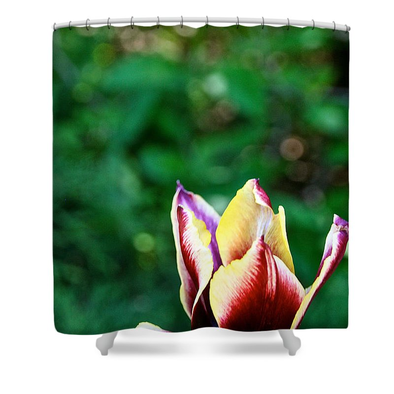 Flower Shower Curtain featuring the photograph Red Gold And Green by Susan Herber