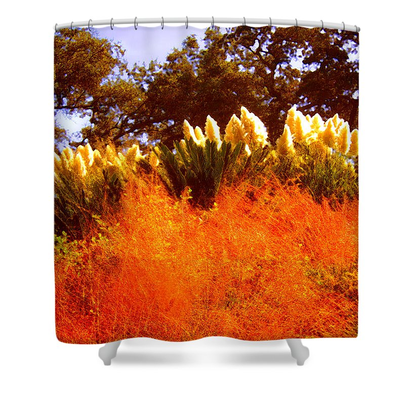 Landscapes Shower Curtain featuring the painting Red Grass by Amy Vangsgard