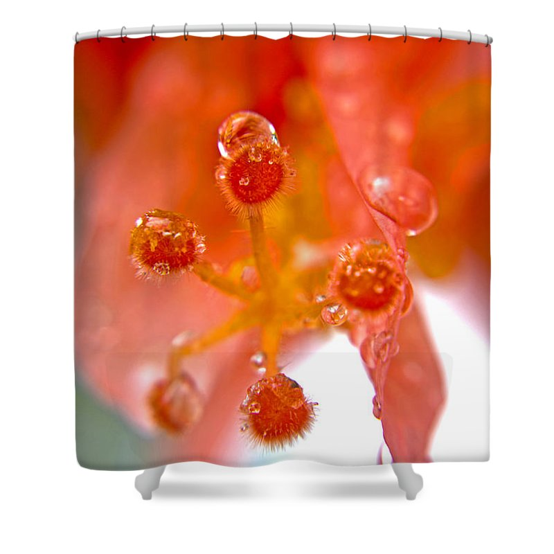 Flower Shower Curtain featuring the photograph Red Hibiscus by Paola Correa de Albury