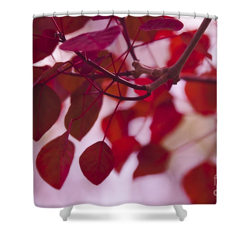Red Leaves Shower Curtain featuring the photograph Red Leaves - Euphorbia Cotinifolia - Tropical Smoke Bush by Sharon Mau