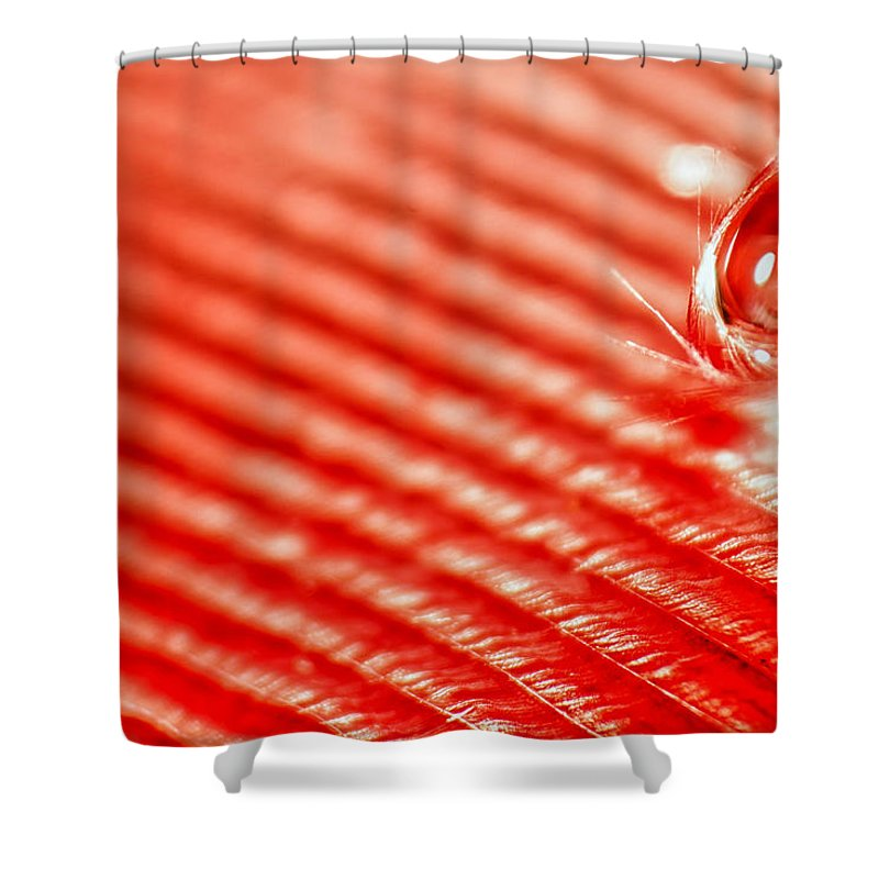 Feather Shower Curtain featuring the photograph Red Lined by Lauri Novak