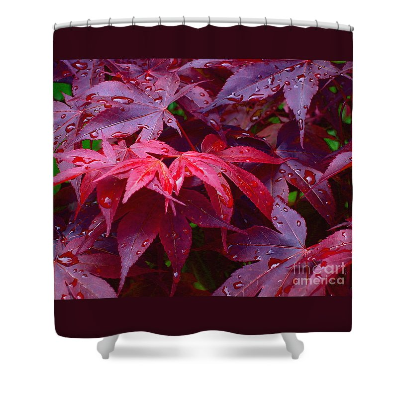 Rain Shower Curtain featuring the photograph Red Maple After Rain by Ann Horn