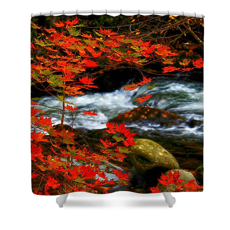 Red Maple .stream Shower Curtain featuring the photograph Red Maple Stream by Randall Branham