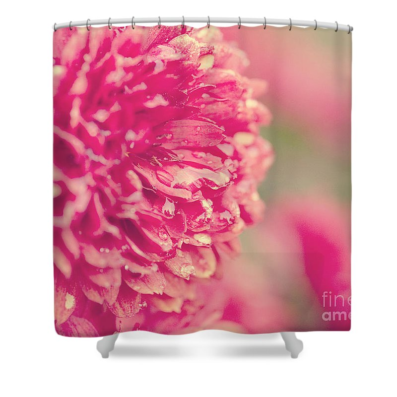 Flower Shower Curtain featuring the photograph Red Mums by Erin Johnson