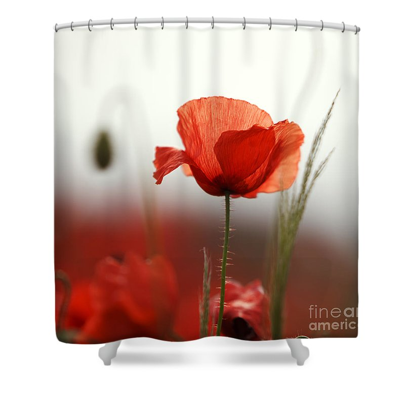 Red poppy flowers shower curtain for sale by nailia schwarz poppy shower curtain featuring the photograph red poppy flowers by nailia schwarz mightylinksfo