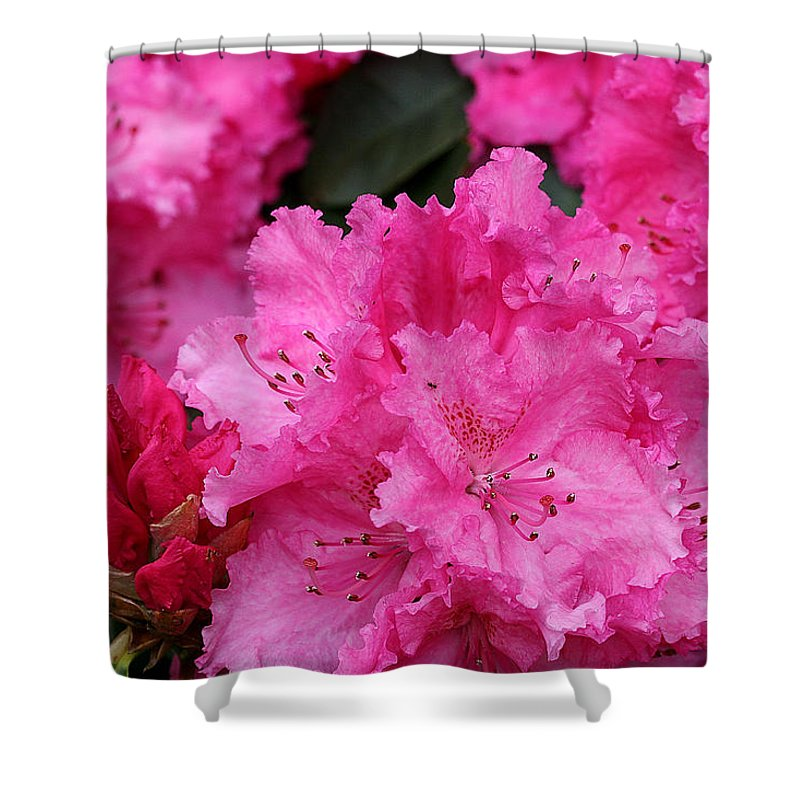 Rhodies Shower Curtain featuring the photograph Red Rhododendrons by Chriss Pagani