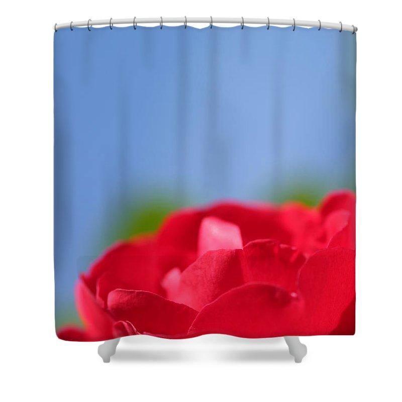 Flower Shower Curtain featuring the photograph Red Rose Blue Sky by Henrik Lehnerer