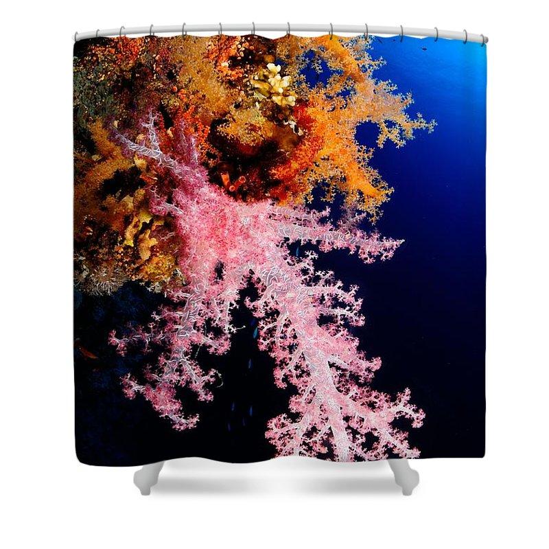 Underwater Shower Curtain featuring the photograph Red Sea Coral by Iñigo Gutierrez Photo