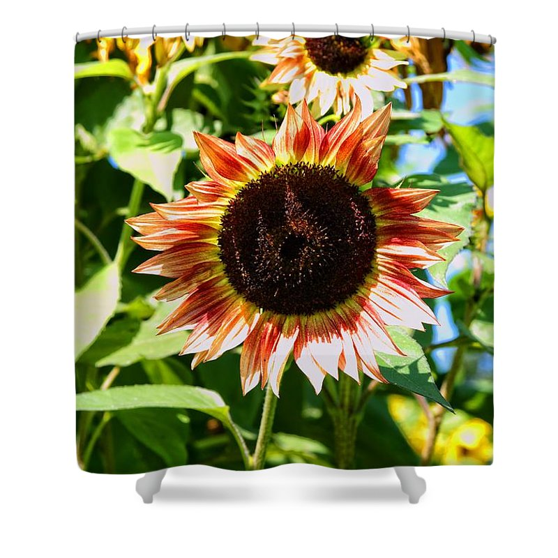 Sunflower Shower Curtain featuring the photograph Red Sunflower by Robert McCulloch