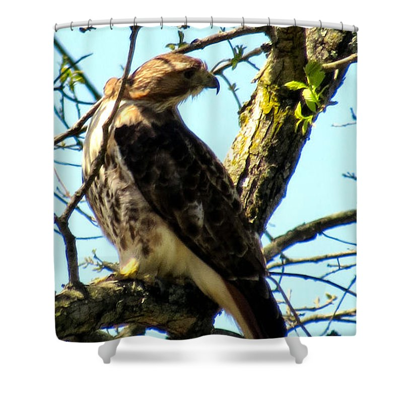 Red Shower Curtain featuring the photograph Red Tailed Interest by Art Dingo