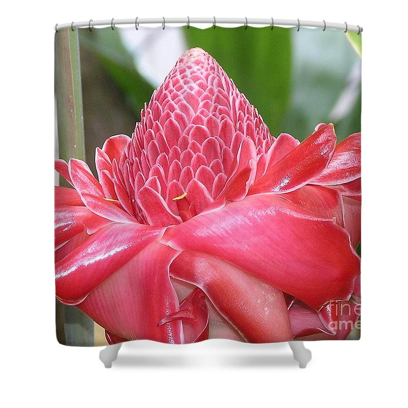 Ginger Shower Curtain featuring the photograph Red Torch Ginger by Mary Deal