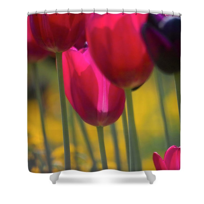 Tulip Shower Curtain featuring the photograph Red Tulips by Heiko Koehrer-Wagner