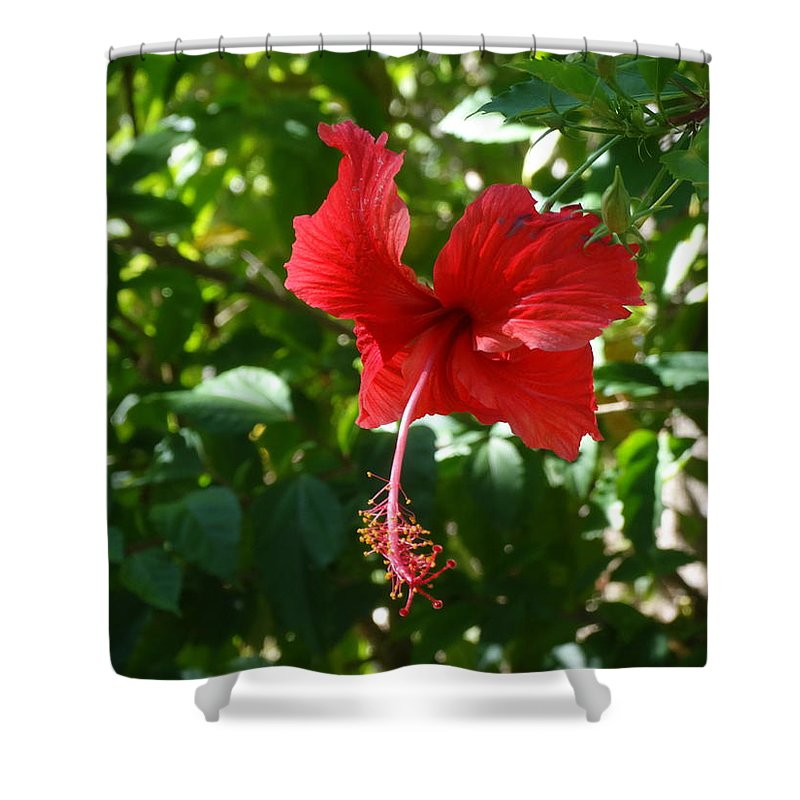 Roatan Shower Curtain featuring the photograph Red Whisperer by Ruby Rammer