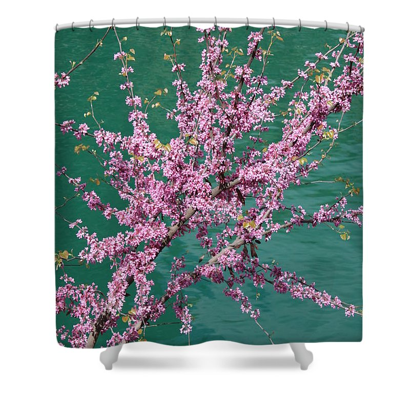 Redbud Shower Curtain featuring the photograph Redbuds Over San Antonio River by Carol Groenen