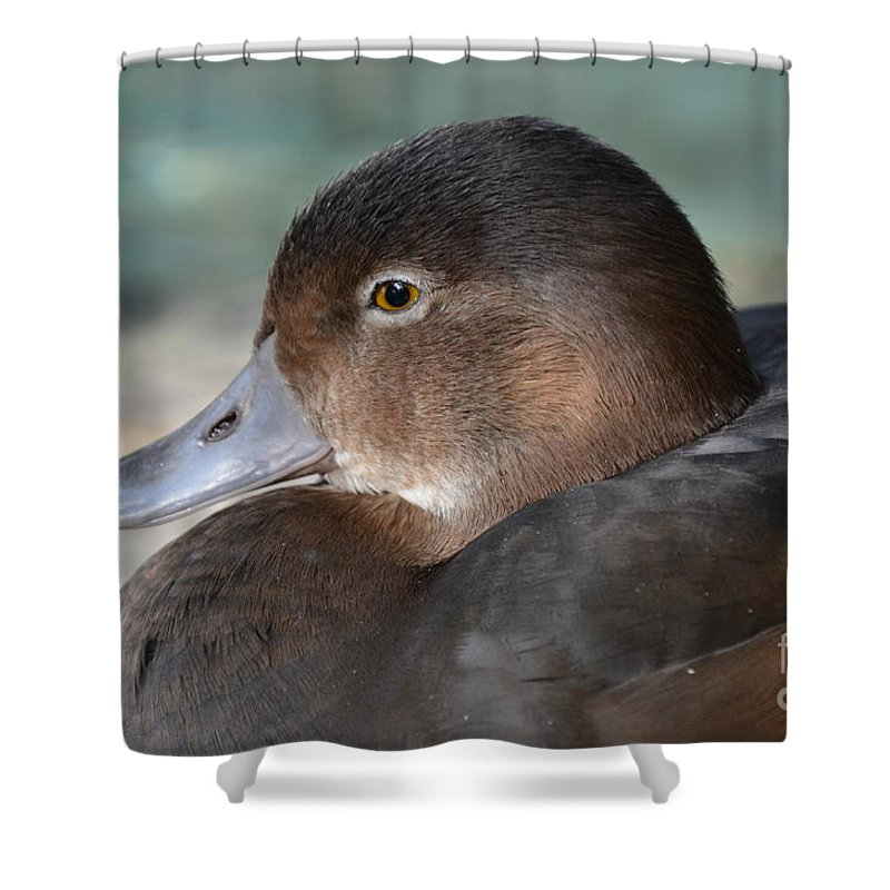 Redhead Duck Shower Curtain featuring the photograph Redhead Duck by Robert Meanor