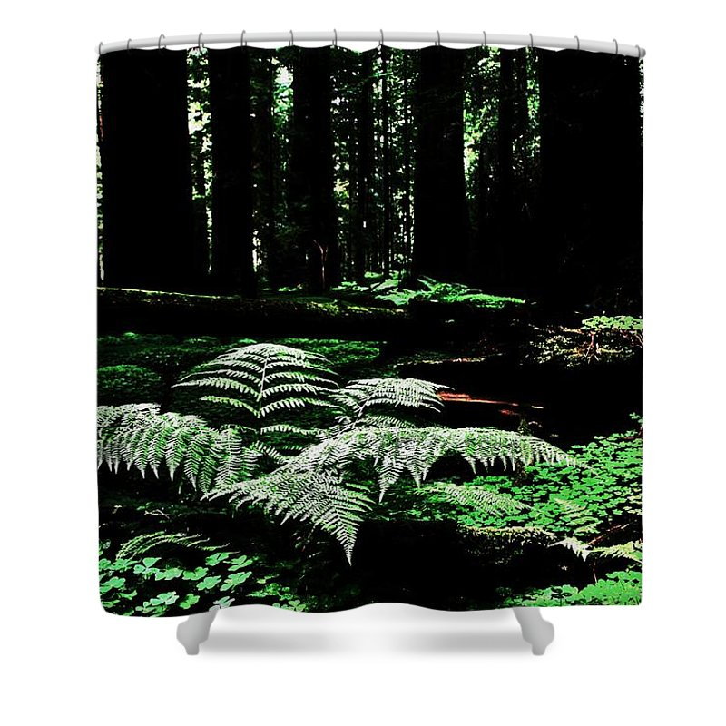 Redwood Shower Curtain Featuring The Photograph Fern By Benjamin Yeager