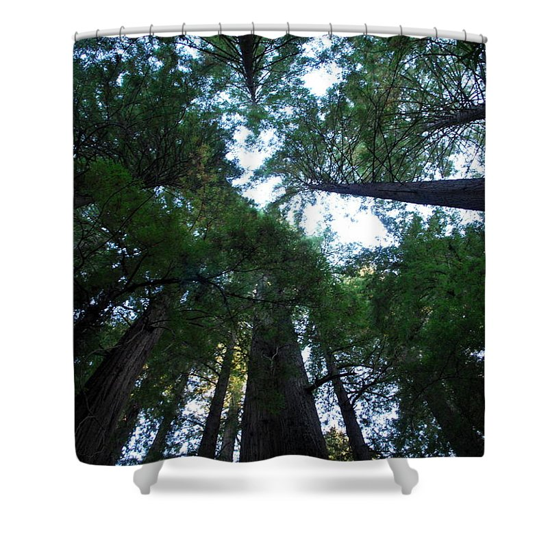 Redwoods Shower Curtain featuring the photograph Redwoods II by Kathy Sampson