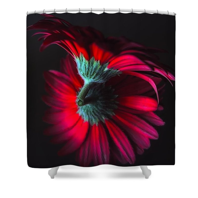 Flower Shower Curtain featuring the photograph Reflection Of The Gerbera by Jenny Hudson