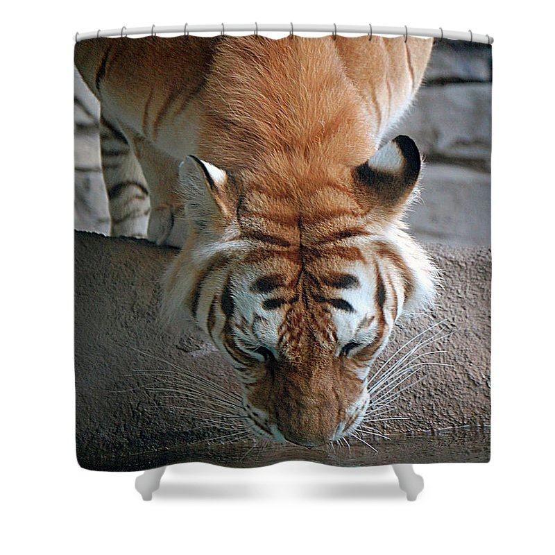 Tiger Shower Curtain featuring the digital art Reflections Of The Wild by DigiArt Diaries by Vicky B Fuller