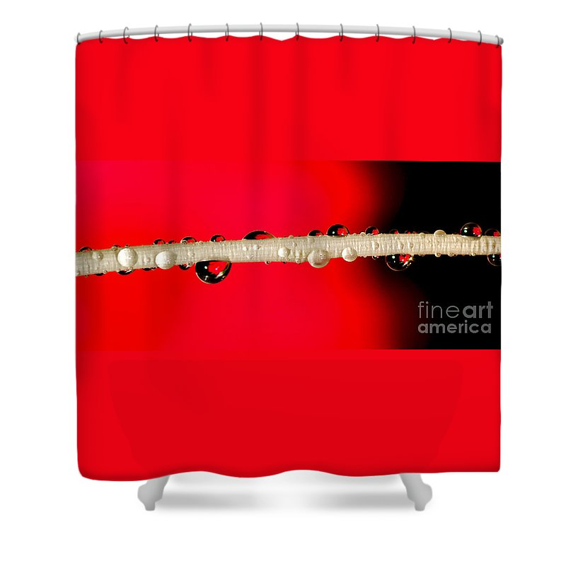 Photography Shower Curtain featuring the photograph Refractions Of A Red Rose by Kaye Menner
