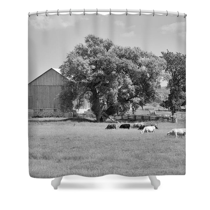 Barn Shower Curtain featuring the photograph Reive Blvd Barn 15059b by Guy Whiteley