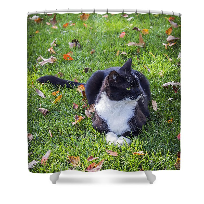 2d Shower Curtain featuring the photograph Relaxing In Autumn by Brian Wallace