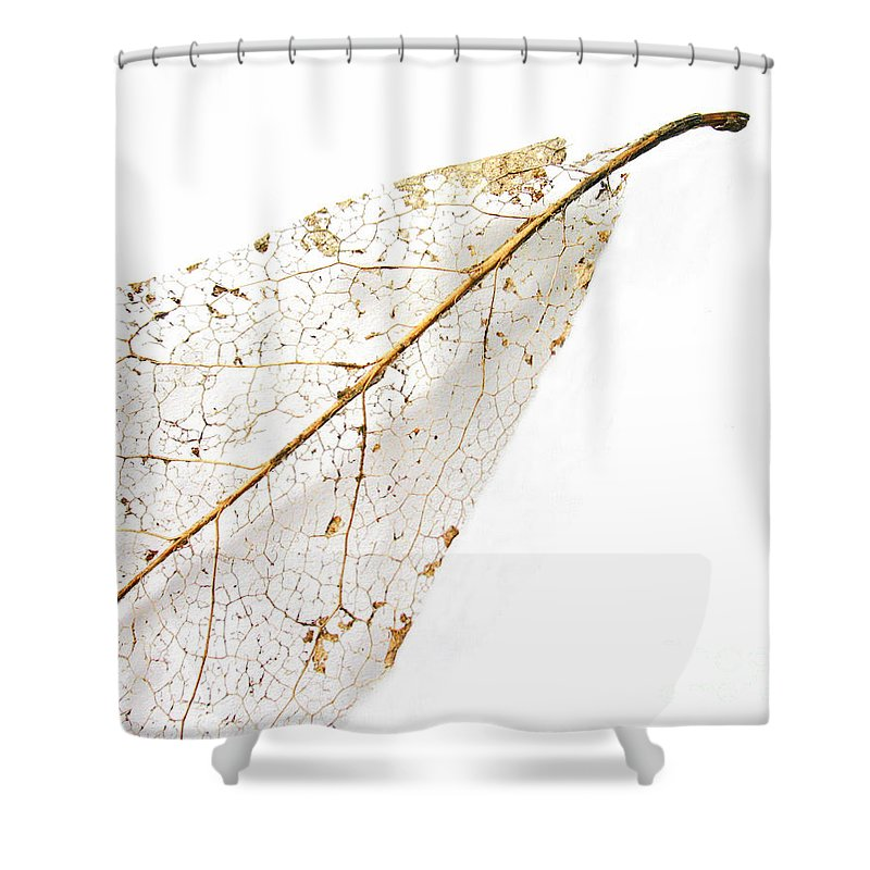 Leaf Shower Curtain featuring the photograph Remnant Leaf by Ann Horn