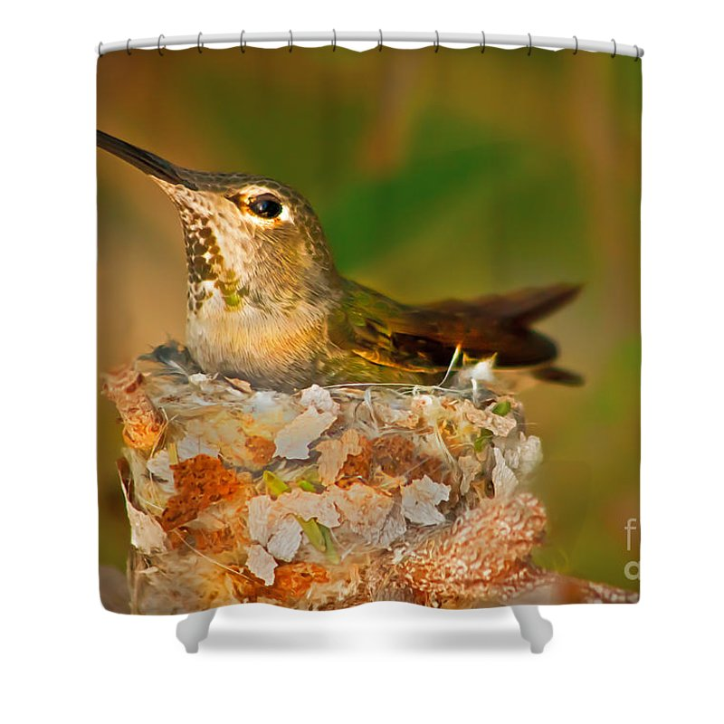 Humming Birds Shower Curtain featuring the Repairing by Robert Bales