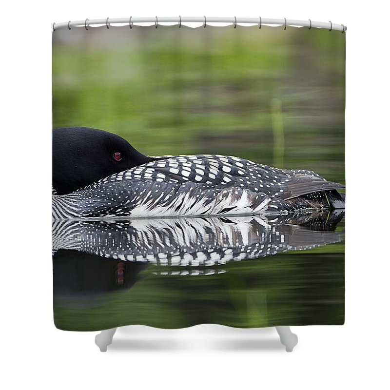 Common Loon Shower Curtain Featuring The Photograph Resting By John Vose