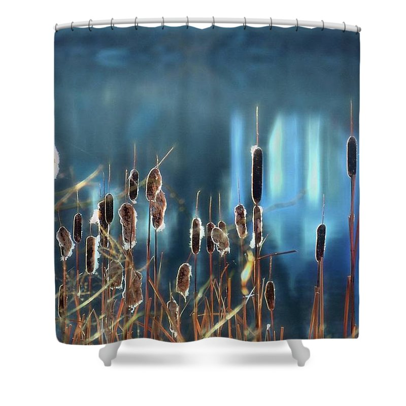 Cattails Shower Curtain featuring the photograph Rhapsody In Blue by Cindy Greenstein