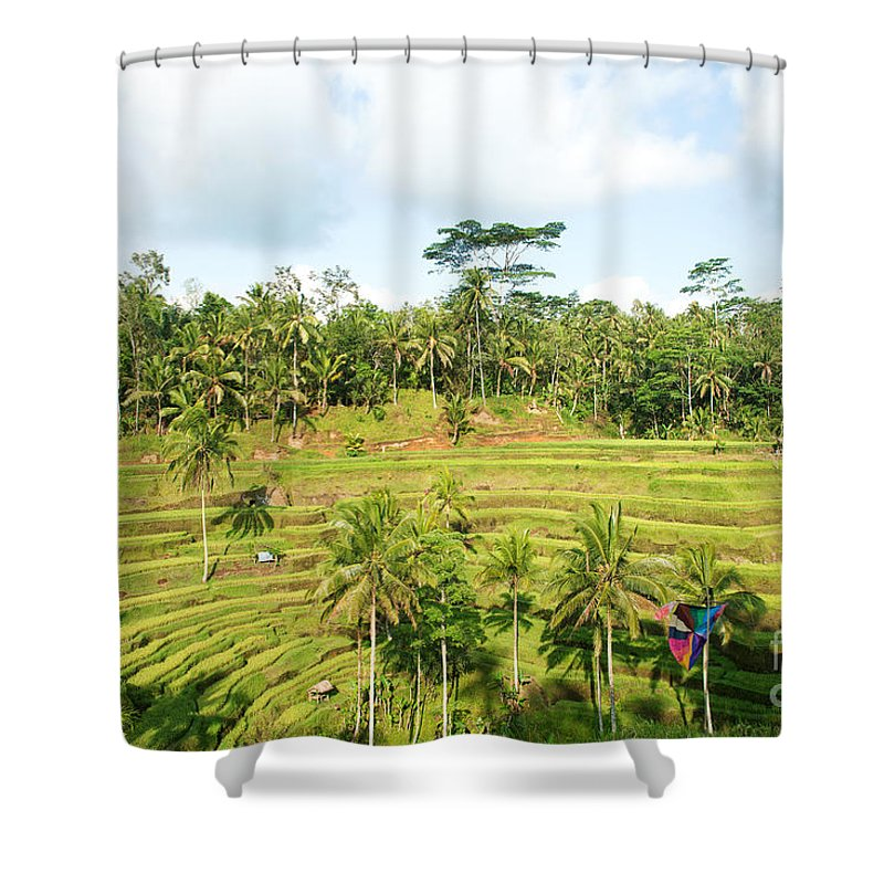 Bali Shower Curtain featuring the photograph Rice Paddy Field Plantation by Yew Kwang