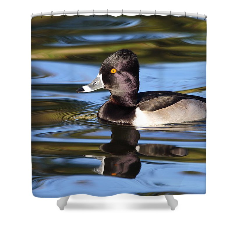 Ring-necked Duck Shower Curtain featuring the photograph Rings around Ring-necked Duck by Andrew McInnes