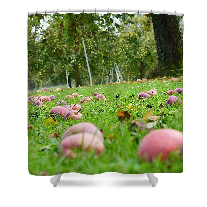 Bio Shower Curtain featuring the photograph Orchard by Felicia Tica