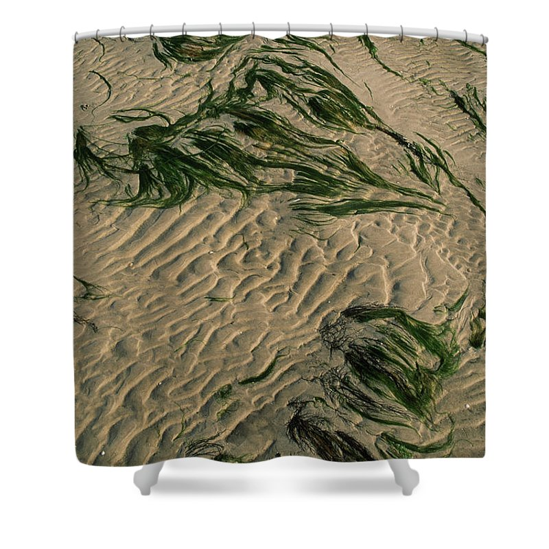 Backgrounds Shower Curtain featuring the photograph Ripple Pattern On Sand Dunes by Norbert Rosing