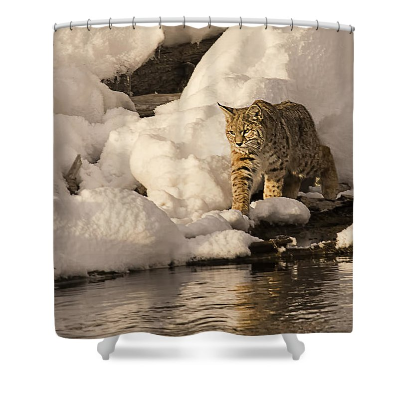 Bobcat Shower Curtain featuring the photograph River Walk by Priscilla Burgers