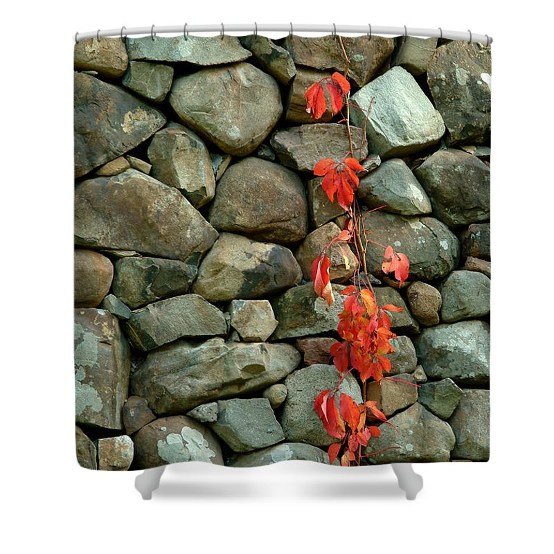 Rocks Shower Curtain featuring the photograph Rocks And Ivy by Robert DeFosses