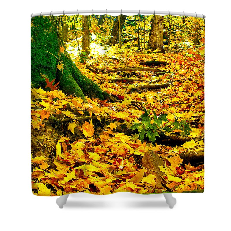 Fall Shower Curtain featuring the photograph Root Steps by Zafer Gurel