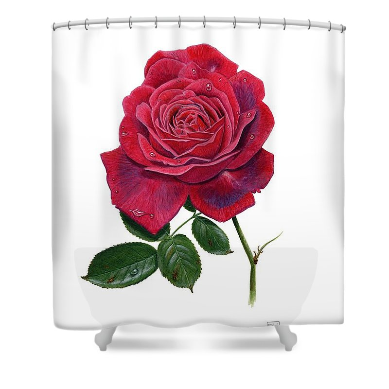 Rose Shower Curtain featuring the painting Rose 1 by Richard Harpum