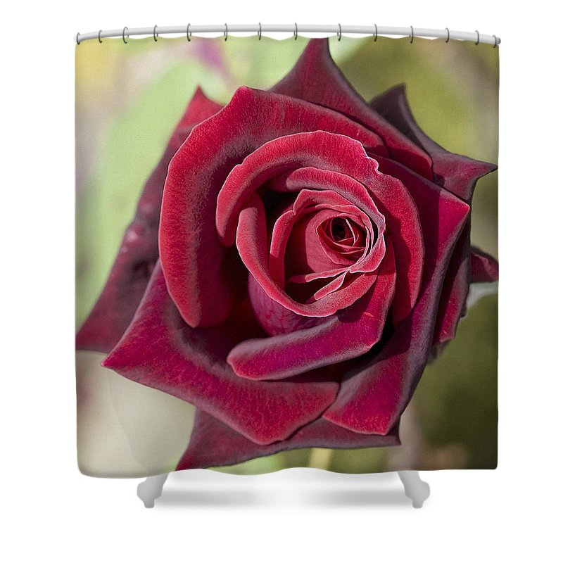 Red Rose Shower Curtain featuring the photograph Rose 7 by Ingrid Smith-Johnsen