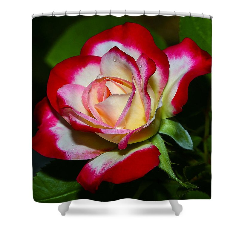Rose Shower Curtain featuring the photograph Rose 8 by Ingrid Smith-Johnsen