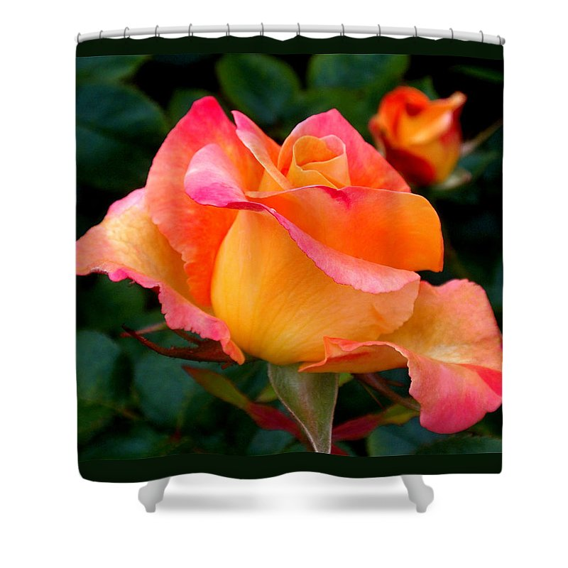 Rose Shower Curtain featuring the photograph Rose Beauty by Rona Black