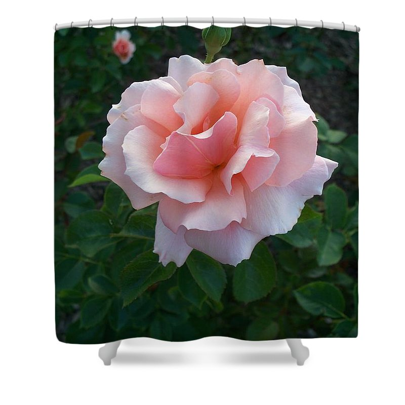 Pink Shower Curtain featuring the photograph Rose by Eric Schiabor