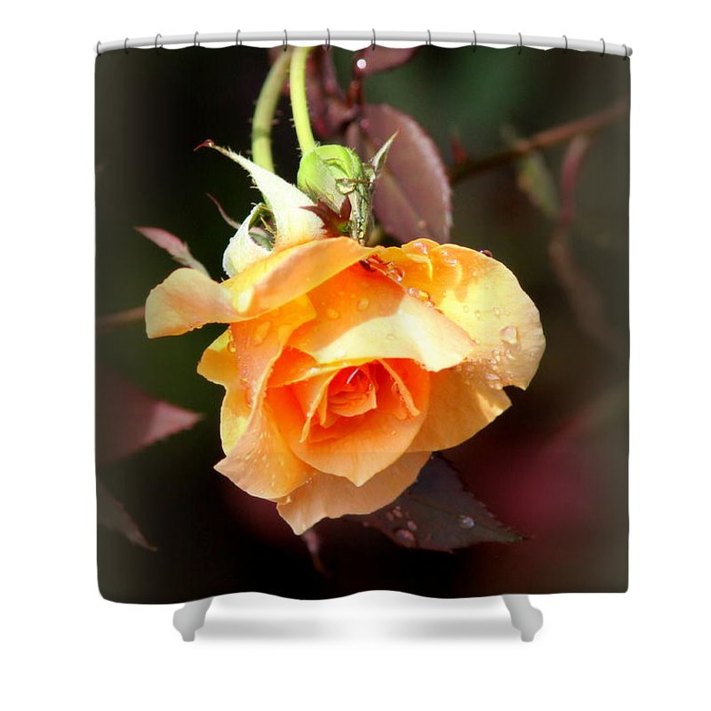 Thank You Shower Curtain featuring the photograph Rose - Flower - Card by Travis Truelove