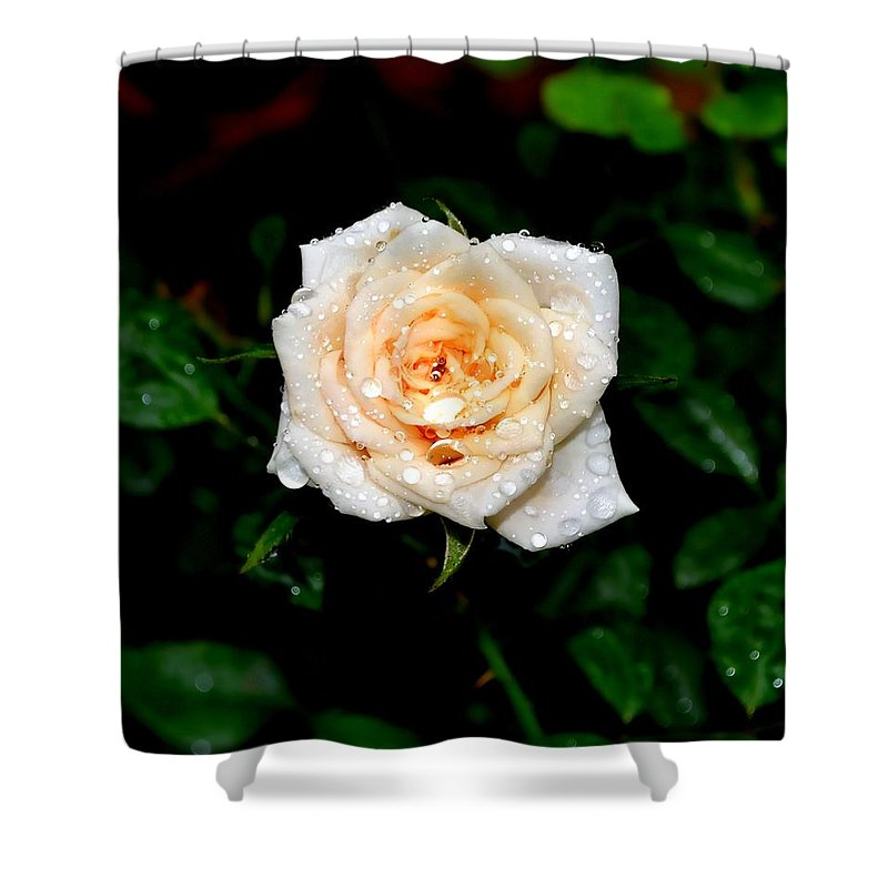 Rose Shower Curtain featuring the photograph Rose In The Rain by Deena Stoddard
