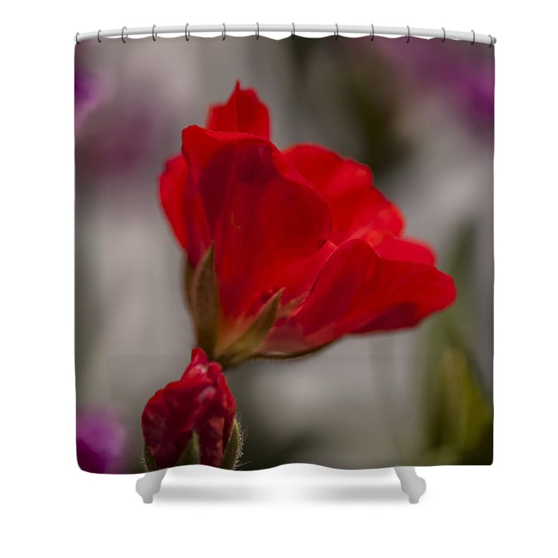 Miniature Rose Shower Curtain featuring the photograph Rose by Kim Upshaw