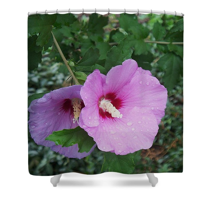 Flower Shower Curtain featuring the photograph Rose Mallow by Eric Schiabor